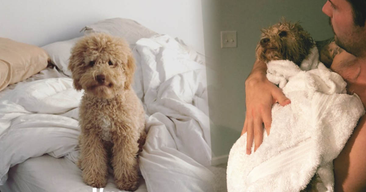 Riley Barber's New Dog Will Melt Your Heart